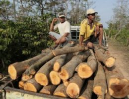 Bolivia Forestry Officials Profit from Harvest of Illegal Wood