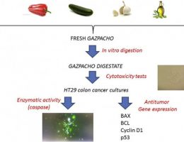 Gazpacho: How this traditional Spanish tomato dish could help fight cancer