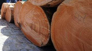 Ghana 'exports rosewood timber illegally to China'