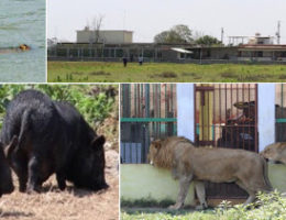 CJNG training camp/torture center where it suspected victims were fed to exotic animals