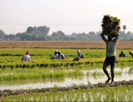 Telangana agro imports to UAE, Middle East to get a boost