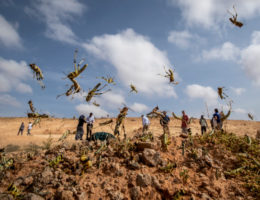 What the massive locust swarm in Africa and the Middle East means to the US