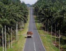 Palm oil politics still threaten EU–Malaysia ties