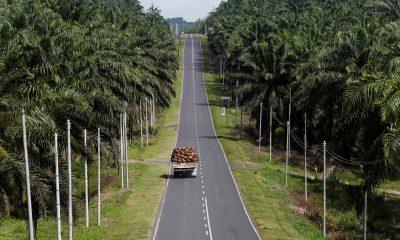 A truck carrying oil palm fruits passes through Felda Sahabat plantation in Lahad Datu in Malaysia's state of Sabah on Borneo island, 20 February 2013 (Photo: REUTERS/Bazuki Muhammad).