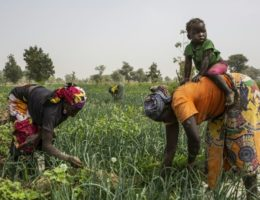 UN makes new appeal for women, hard-hit by virus job losses