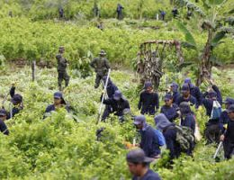 Colombia's Coca Eradicators Spared From Coronavirus Lockdown