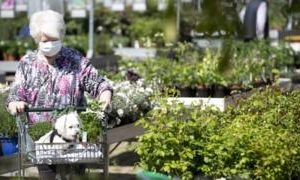 Coronavirus: Garden centres in England to reopen next week