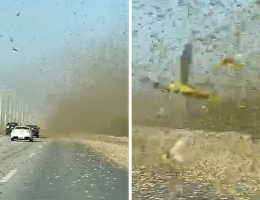 Locusts Swarm in Middle East in Disturbing Video, as if 2020 isn't Bad Enough