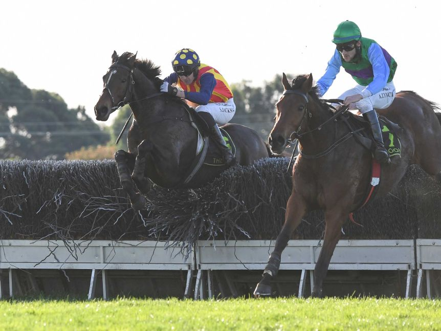 two racehorses jump a steeplechase in Warrnambool