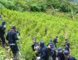 Drop in Coca Crops, Increase in Colombian Cocaine