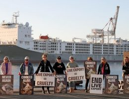 Livestock ship departs WA for Middle East