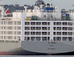 Thousands of sheep stranded on coronavirus export ship in WA to be sent to Middle East