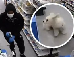 Video shows small dog helping to foil NYC pharmacy robbery