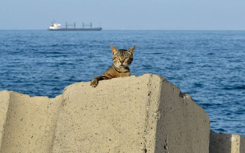 A cat is pictured at the sea front promenade before a curfew imposed by authorities to prevent the spread of the COVID-19 coronavirus in the Bab el-Oued district of Algeria's capital Algiers on June 29, 2020.
