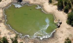 Botswana: Lab tests to solve mystery of hundreds of dead elephants