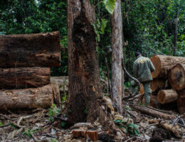Environmental Fines Become Flashpoint for Brazil's Deforestation Crisis