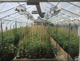 Re-Raid of a California Property Yields Over 46,000 Illegally Grown Marijuana Plants