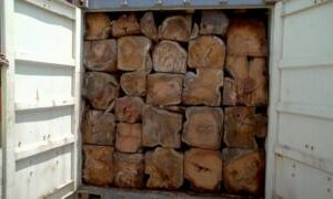 Rosewood smuggling in The Gambia: Shipping firm halts timber exports