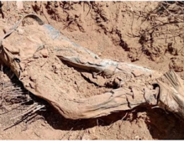 Video: Valle de San Pedro, Baja, Ca: 15 Decomposing Bodies Found, Search Still On