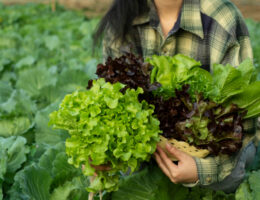 Freshket lands $3 million Series A led by Openspace to streamline Thailand's food supply chain