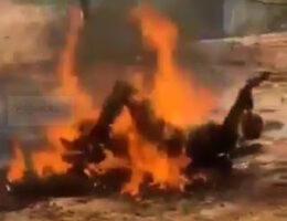 Sonora: Caborca Cartel interrogates and incinerates a Gente Nueva Delta Group member