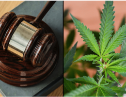 US DEA Wants California's Marijuana Documentation and a Federal Court Agrees