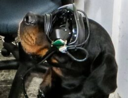 United States Military Testing Augmented Reality Goggles For Dogs