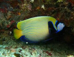 Ellaidhoo Maldives by Cinnamon introduces a Night Diving Experience