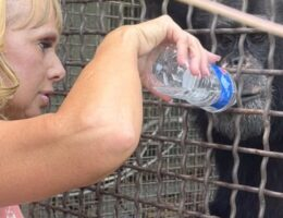 Emergency Stay Filed to Try and Save Chimps From PETA's Potentially Deadly Clutches