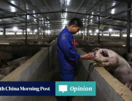 Factory farming a greater pandemic risk than consumption of exotic animals