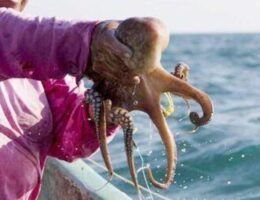 Fishermen Call for Aid Against Illegal Fishing in Yucatán, Mexico
