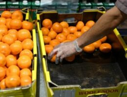Risks abound in Australia's new ASEAN agriculture visa