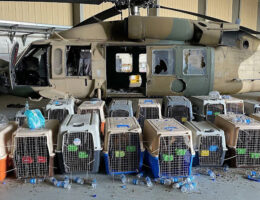 US Military Abandons Dozens Of K-9 Dogs In Cages While Scrambling To Leave Kabul