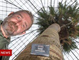 200-year-old palm comes down in Edinburgh Botanics renovations