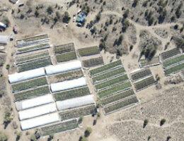 Alfalfa, Oregon: C.O. Drug Agents Dismantle Major Illegal Marijuana Grow Run By Mexican Cartel