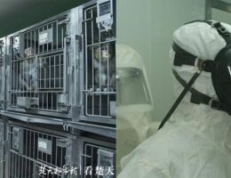 Confirmed: Wuhan Scientists Planned to Release Coronaviruses Into Bat Caves 18 Months Before Pandemic