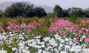 Could The Taliban Form An Alliance With Mexico's Drug Cartels?