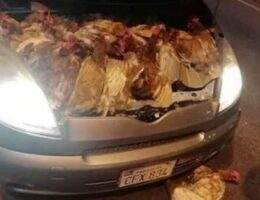 Fowl Play – How Contraband Chicken is Flooding Paraguay