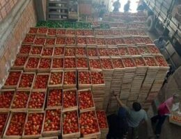 How Contraband Tomatoes are Hurting Paraguay's Economy